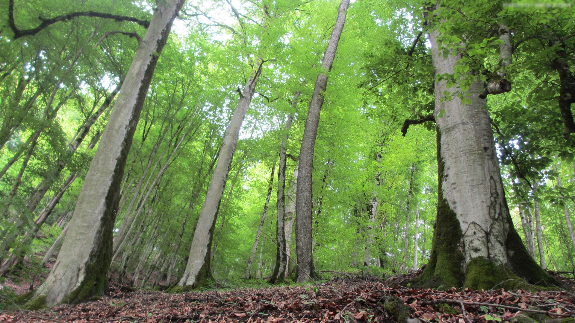 Image result for جنگلهای دوهزار