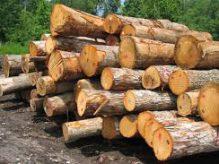 چوب بری توسکا