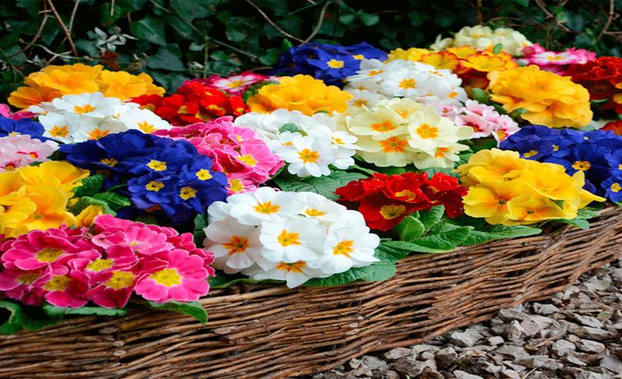 گیاهان درمانگر عفونت بدن